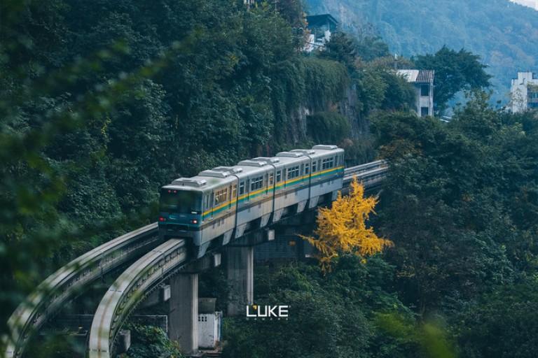 重庆没有森林,繁茂疯长于心