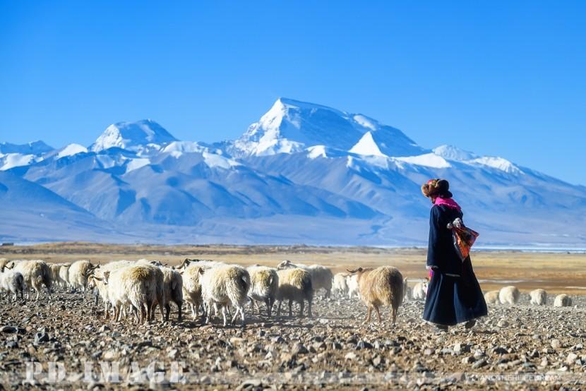 冬季里的极地阿里,挥之不去的西藏情愫